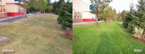 Commercial Lawn Care Greenfield