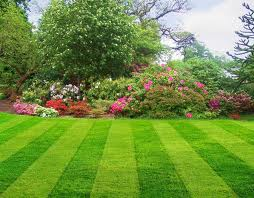 Commercial Lawn Care Minneapolis