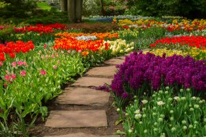 landscaping companies maple grove advanced irrigation