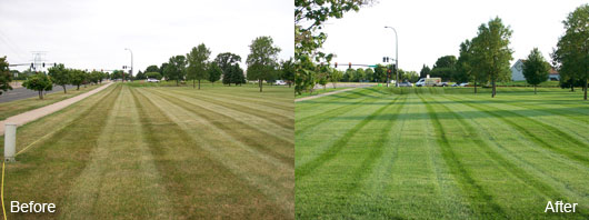 Commercial Front Lawn Care