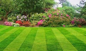 Lawn Care Services Monticello